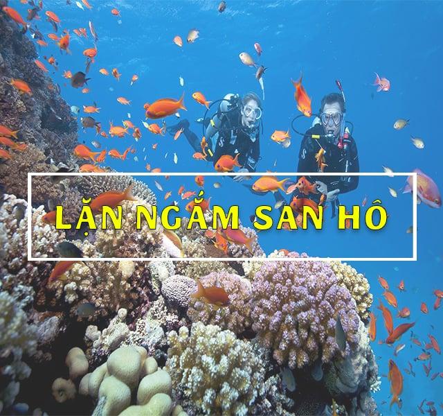 Lặn Ngắm San Hô